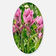 Rosy Paintbrush (Castilleja rhexifo Decal