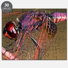 Ruddy darter dragonfly Puzzle