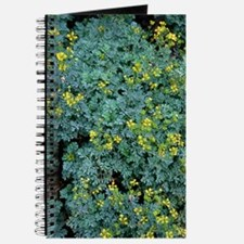 Rue (Ruta graveolens 'Jackman's Blue') Journal