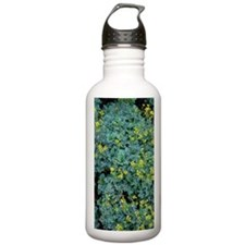 Rue (Ruta graveolens ' Water Bottle