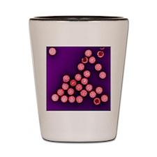 Rotavirus particles, TEM Shot Glass