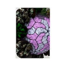 Rotavirus particle, artwork Rectangle Magnet