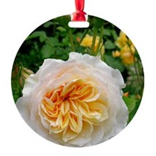 Rose flower (Rosa sp.) Ornament