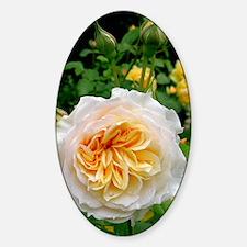 Rose flower (Rosa sp.) Decal