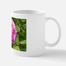 Rose (Rosa 'Commandant Beaurepaire') Mug