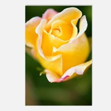 Rose (Rosa) Postcards (Package of 8)
