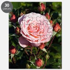 Rose (Rosa 'Sexy Rexie') Puzzle