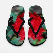 Rose (Rosa 'Ruby Wedding') Flip Flops