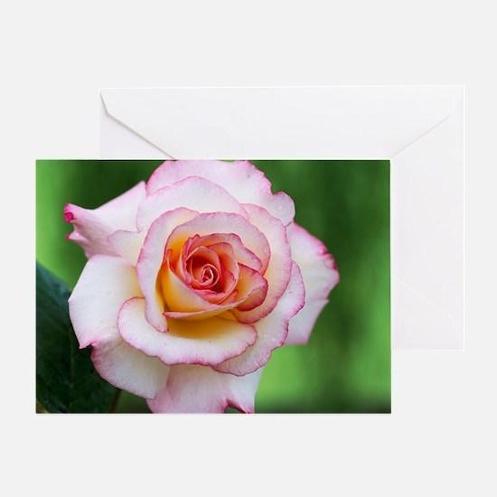 Rose (Rosa 'Handal') Greeting Card