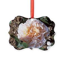 Rose (Rosa 'Evelyn') Ornament