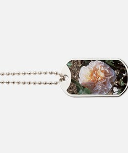 Rose (Rosa 'Evelyn') Dog Tags