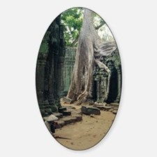 Roots of a kapok tree Decal