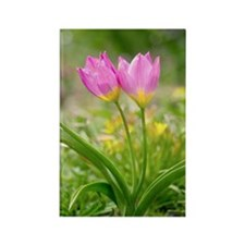 Rock tulips Rectangle Magnet