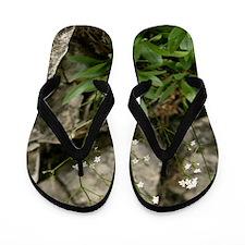 Rock Valerian (Valeriana saxatilis) Flip Flops