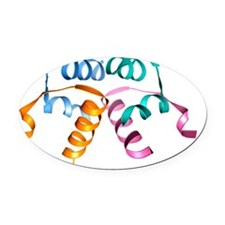 Relaxin hormone molecule Oval Car Magnet