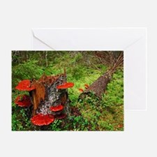 Reishi fungus Greeting Card