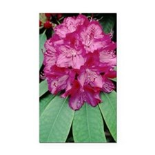 Rhododendron 'Cynthia' Rectangle Car Magnet