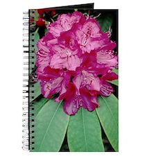 Rhododendron 'Cynthia' Journal