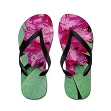 Rhododendron 'Cynthia' Flip Flops