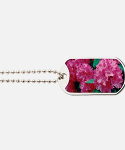 Rhododendron 'Cynthia' Dog Tags