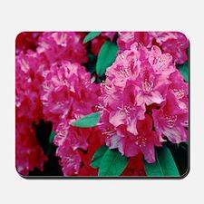 Rhododendron 'Cynthia' Mousepad
