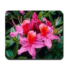 Rhododendron 'Fanny' Mousepad