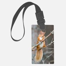 Red squirrel on a branch Luggage Tag