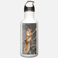 Red squirrel on a bran Sports Water Bottle