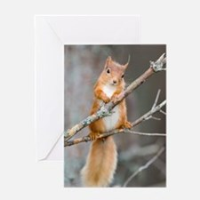 Red squirrel on a branch Greeting Card