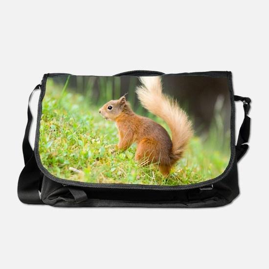 Red squirrel feeding Messenger Bag
