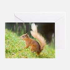 Red squirrel feeding Greeting Card