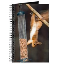 Red squirrel Journal