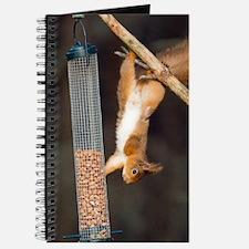 Red squirrel Journal
