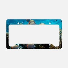 Redtail butterflyfish over a  License Plate Holder