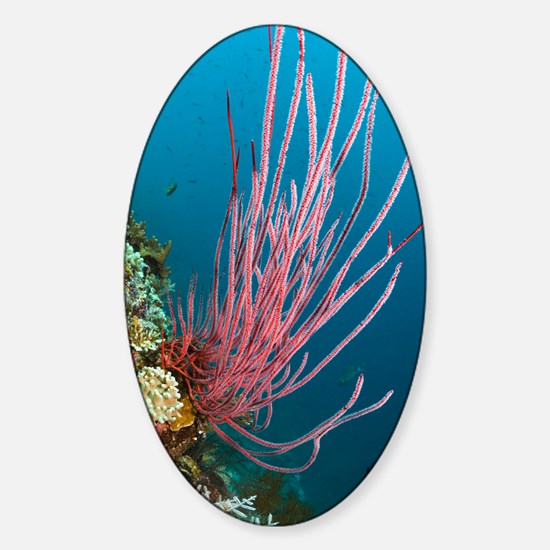 Red whip coral Sticker (Oval)