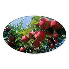 Red apples on a tree Decal