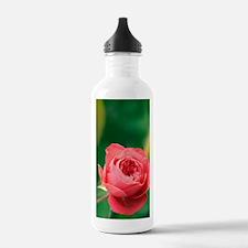 Red rose (Rosa hybrid) Water Bottle