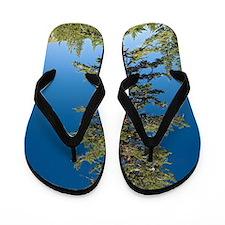 Red fir tree (Abies magnifica) Flip Flops