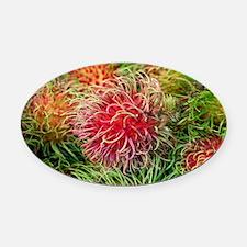 Rambutan fruit (Nephelium lappaceu Oval Car Magnet