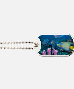 Queen angelfish and blue tangs Dog Tags