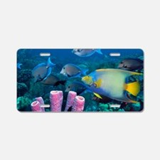 Queen angelfish and blue ta Aluminum License Plate