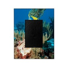 Queen angelfish Picture Frame
