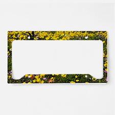 Ranunculus asiaticus License Plate Holder