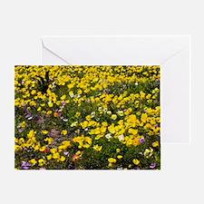 Ranunculus asiaticus Greeting Card