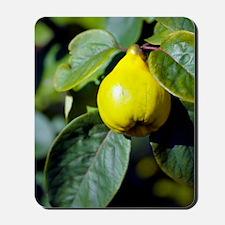 Quince fruit Mousepad