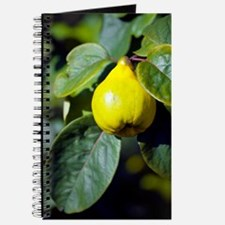 Quince fruit Journal