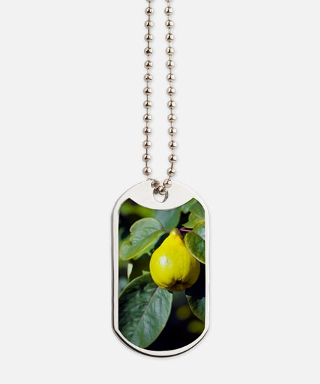 Quince fruit Dog Tags