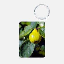 Quince fruit Keychains