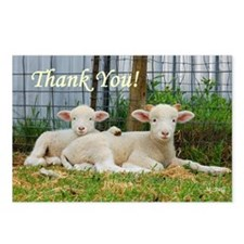 Buddy Lambs ~ Thank You! Postcards (Package of 8)