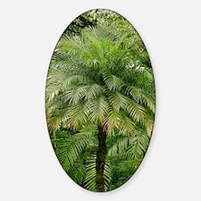 Pygmy date palm (Phoenix roebelenii Sticker (Oval)